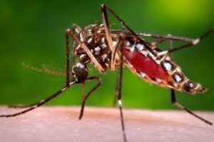 Road to Rio Leads to Zika – How do we prevent illness and spread of disease?